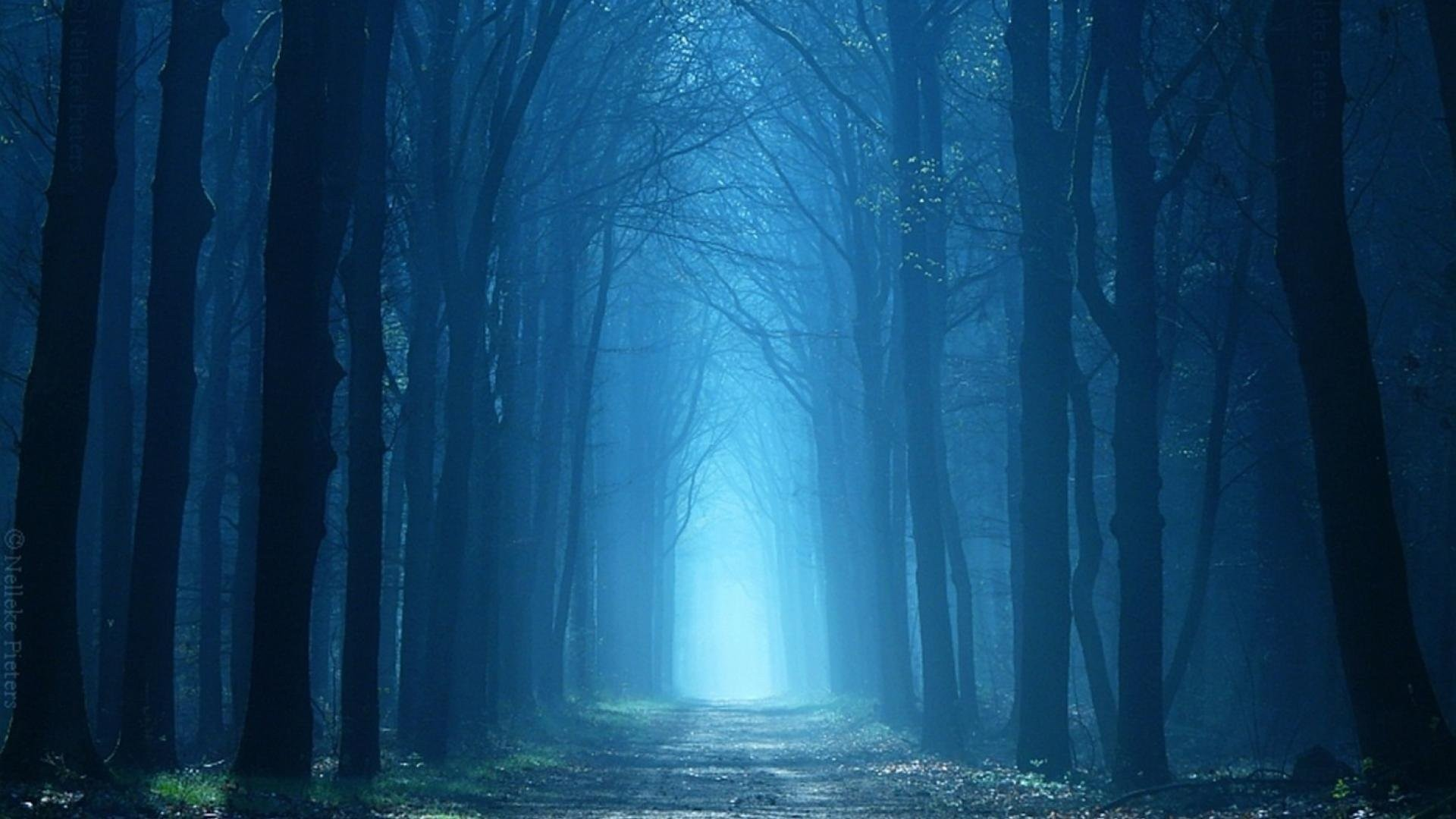 299178762_trees_forest_landscape_road_fog_path_nature_woods_tree_wallpapers_hd_ipad_122_145lo.jpg