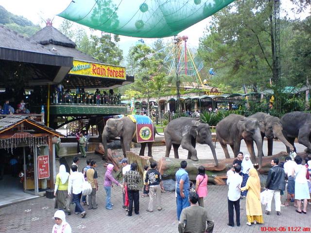 46754_elephant_122_637lo.jpg