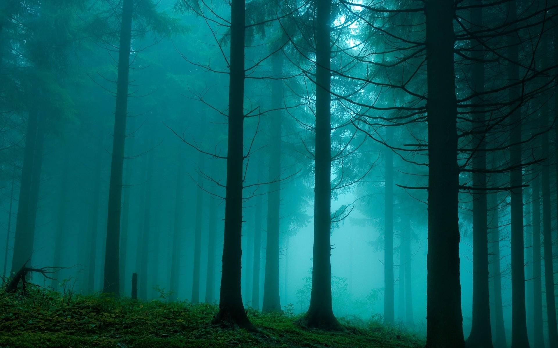 299151436_foggy_forest_wallpaper_7_122_209lo.jpg