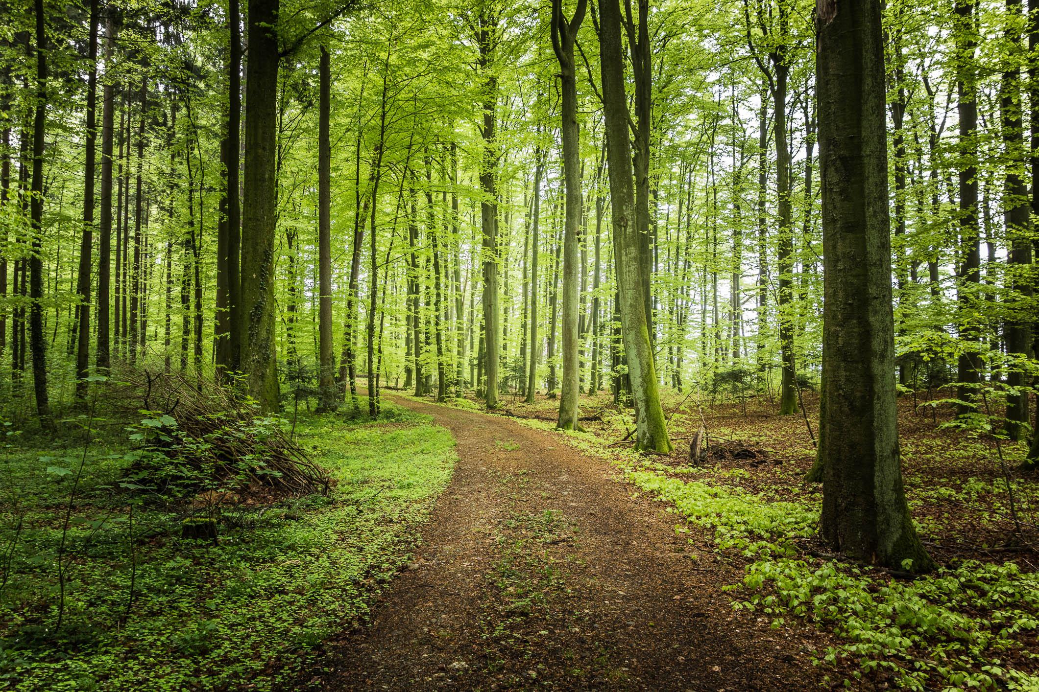 299175339_road_forest_trees_landscape_f_wallpaper_1_122_159lo.jpg