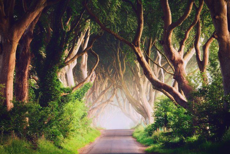 299144287_157549_Ireland_road_trees_landscape_nature_748x499_122_1007lo.jpg