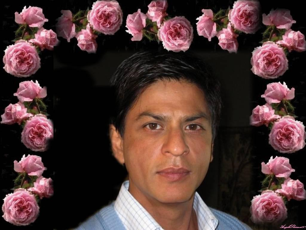 10335_Pink_Rose_Shah_Rukh_2_122_80lo.jpg