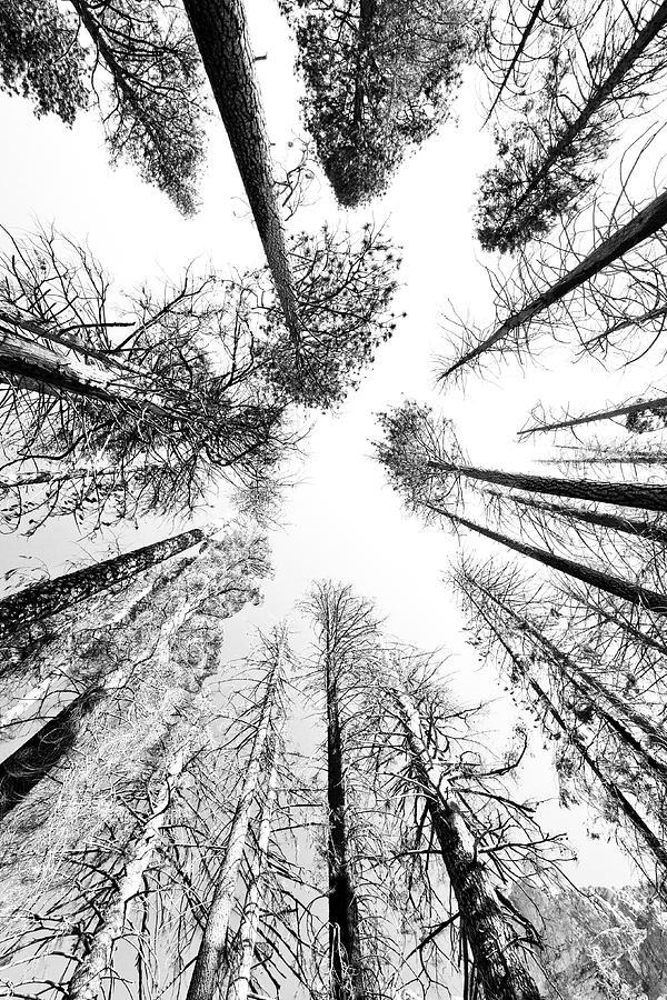 506031167_black_n_white_sky_trees_rick_pham_122_504lo.jpg