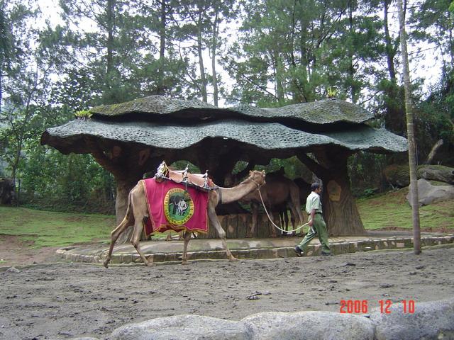 45100_camel_122_622lo.jpg