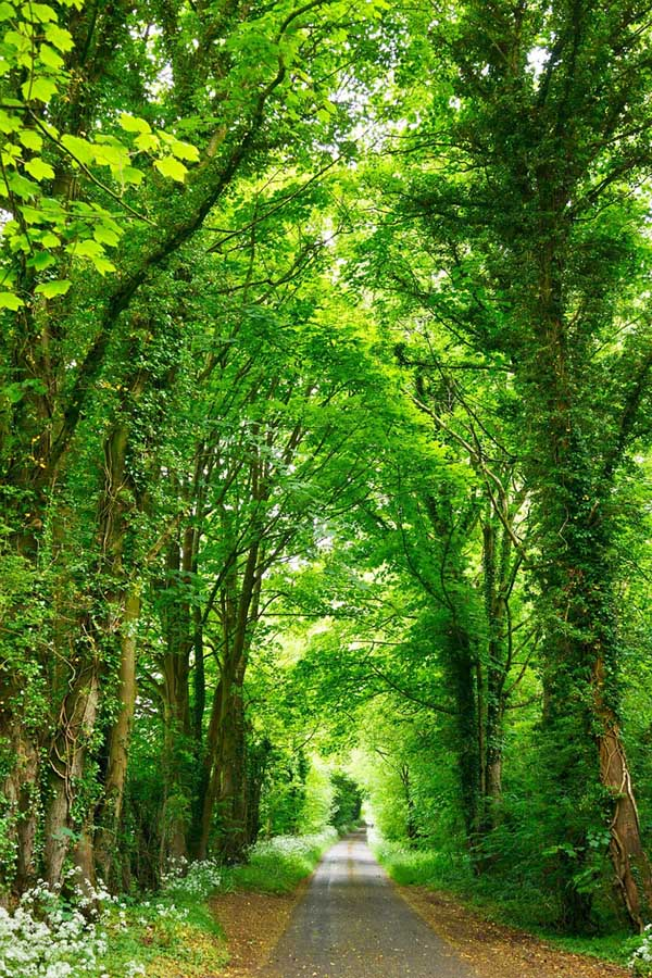 299137630_Road_with_trees_landscape_122_87lo.jpg